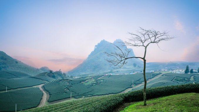 Jak sprzedać nieruchomość leśną?